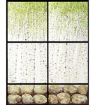ZilenZio absorbenter Dezign kunsttrykk bjørk